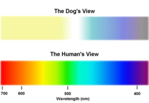 Dog's view